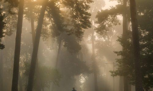 abigj, abigj photography, aj, arturas jendovickis, fine art, fine art photography, fog, landscape, lithuania, photography, sunrise, vilnius, vingio parkas, peizazo fotografija, pirkti mena, lietuviskas menas, lithuanian art, lietuviu fotografai, lithuanian photographers